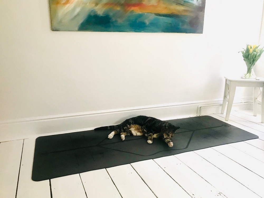 Pippa yoga cat